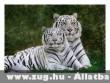 2 tigris