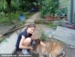 Corvette (német dog) és én