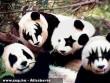 Vámpír-Emo Pandák