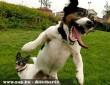 Fotómániás kutyák