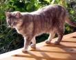 Macsek kiment a napra, pedig az árnyékot szereti