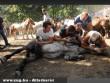 Állatkínzók Spanyolországban