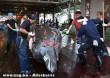 Kifogott bálna japánban