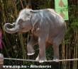 Kötéltáncos elefánt