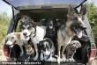 Kutyák - ülünk a kocsiban :D