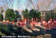 A rózsás flamingók
