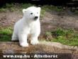 Knut, bocsként 2007-ben