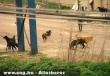 Székelyföld a kóbor kutyák birodalma