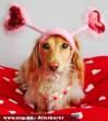Ne élõ állattal kedveskedjünk Valentin napon