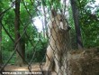 Farkas testközelbõl (saját fotó)