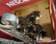 Cicamentés - magára hagyott kismacskákat rejtett a doboz