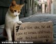 A macska 7 élete :-)
