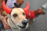 Állatfarsang: Az ördög