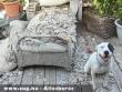 Jó kutya!