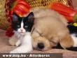 Kutya- macska barátság
