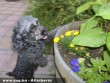 muki és a virágok
