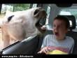 Ijesztgetõ ló