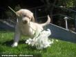 Virágot szedõ kutyus