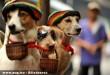 Divatos kutyák