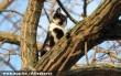 Leszedték a fán rekedt cicust :)