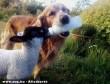 Gondoskodó kutyus