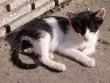 Balatoni pisis popsis cicababa