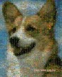 Kutya mozaikból :-)