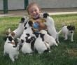 Imádnivaló kutyusok támadták le a krapekot :)