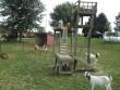 Kecskefarm