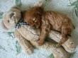 Kutya-jó helyen :) pihenget