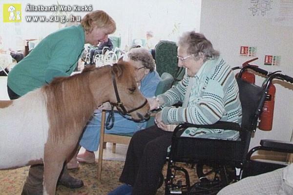 Terápiás póni gyógyítja a betegeket