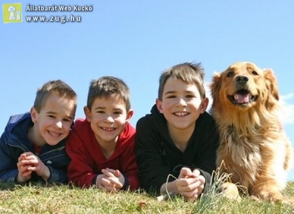 Kutyavásárlás előtt van néhány fontos dolog...
