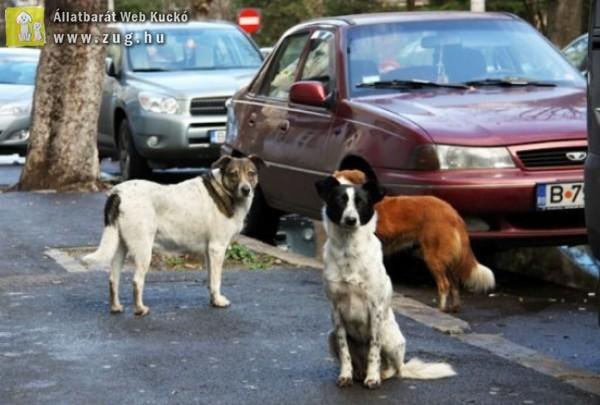 Tüntetnek az állatvédők - elegük van a kutyagyilkolásból