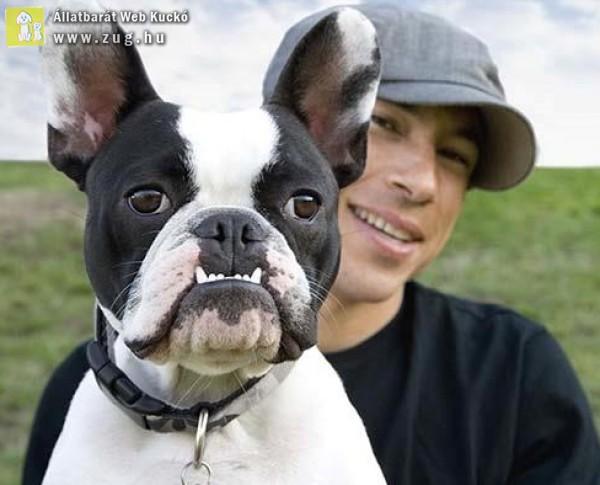 A kutya származása - hogyan keletkezhetett az ember legjobb barátja?!