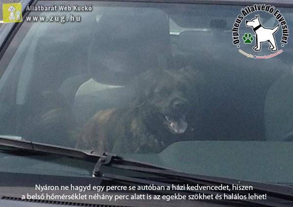 A nyáron kocsiban hagyott kutya hamar hőgutát kaphat