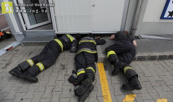 Cicákat mentettek a tűzoltók