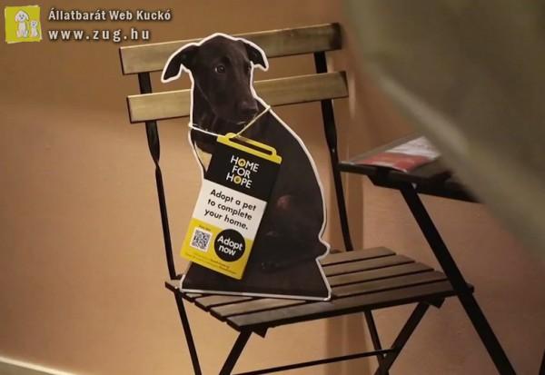 Ikea az állatok megmentéséért