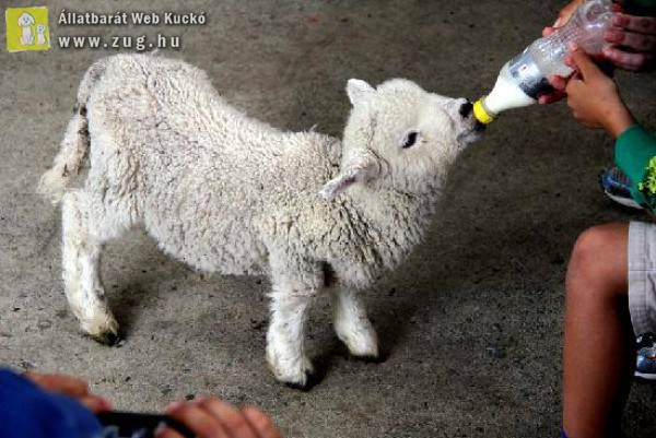 Magára hagyott állatkölykök etetése - állatmentés