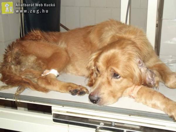 Egyre több kutya válik a szívféreg áldozatává - mázli története