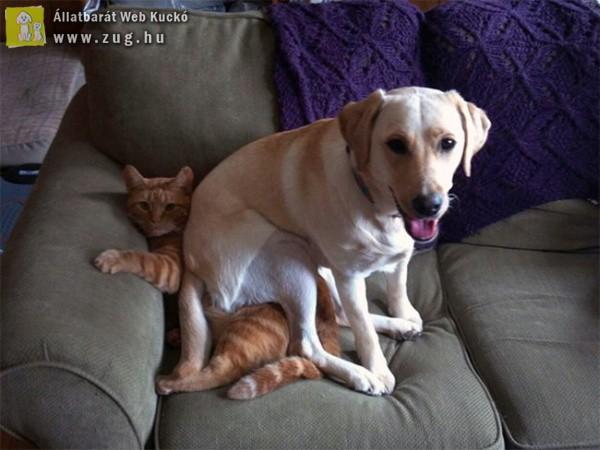 Kutyusok, akik párnának használják a cicusokat