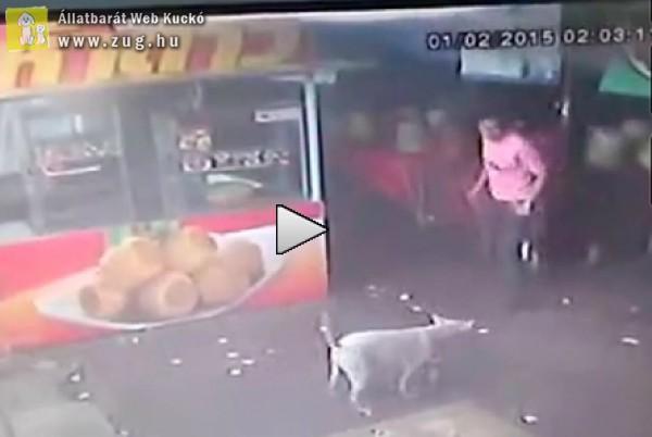 Bele akart rúgni a kutyába, ráfázott - nézd meg a videót