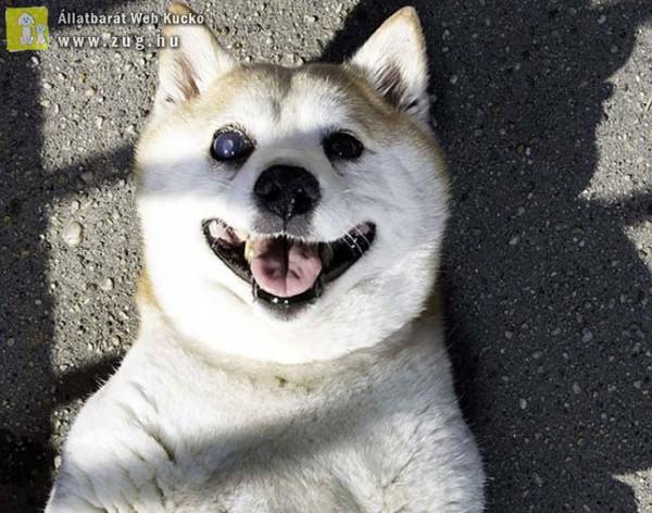 Folyton mosolygó arcával mindenkit levesz a lábáról Fahéj