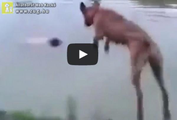 Kutya, aki egyből ugrik a fuldoklónak hitt gazdi után