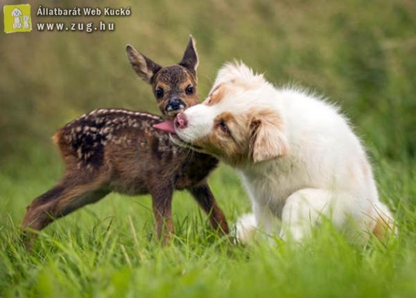 A befogadott őzike és a család kutyusa elválaszthatatlan barátok lettek