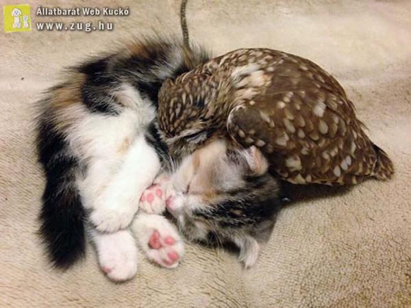 A kiscica és a bagolyfióka, akik legjobb barátok lettek