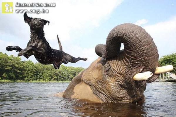 Az árva elefánt és a labrador nem mindennapi barátsága