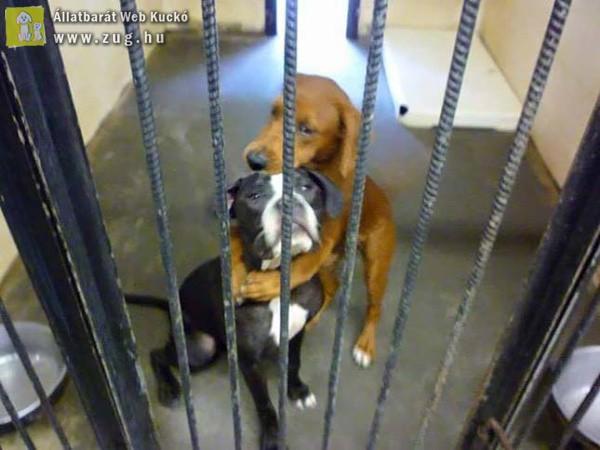 Megható történet az egymást ölelő kutyusokról