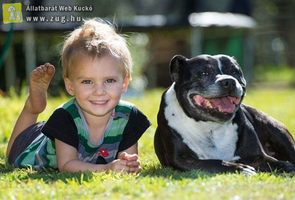 Megmentette kétéves gazdija életét a hős kutyus