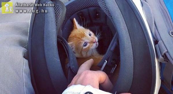 Forgalmas útkereszteződésből mentette meg a kiscicát a motoros