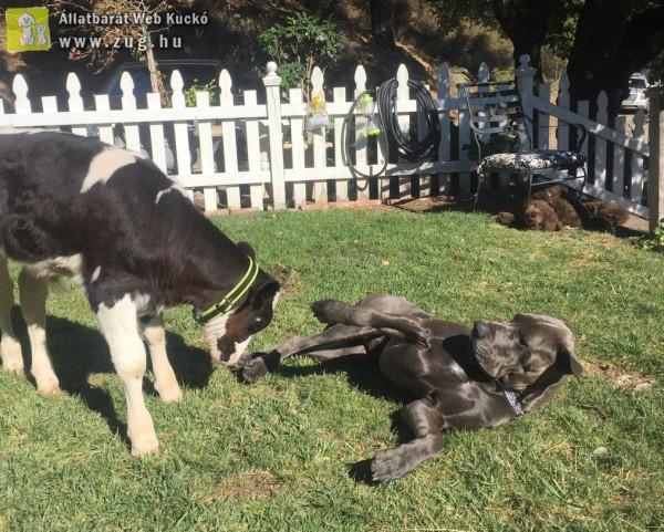A boci és a kutyus elválaszthatatlan barátok lettek
